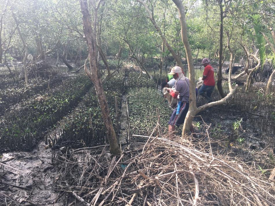 Professor Serving: Empowerment of Ponds Through Mangrove Restoration in Tanjung Rejo Village, Deli Serdang